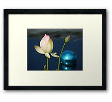 tulip & blue ball Framed Print