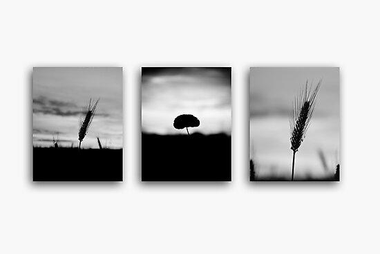 Lonely Crops by Matt Sillence