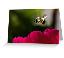 Busy Bee 1 Greeting Card
