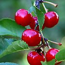 Cherry any one? by Robin D. Overacre
