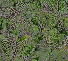 Purple Leaves by Tom  Reynen