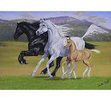 Kirstie's Horses Photographic Print