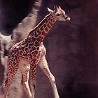 New baby Giraffe by dragonsnare