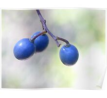 Three Blue Berries Poster