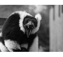 Yawn - black & white Photographic Print