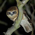 Boo-Book Owl by Biggzie
