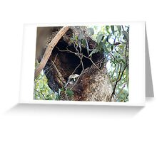 Baby Powerful Owl in nest Greeting Card