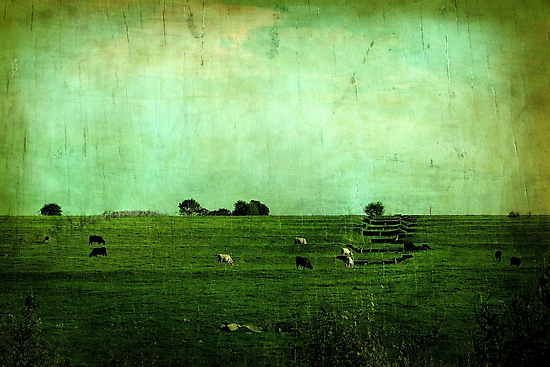 The Green Yonder by Trish Mistric
