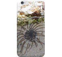 Tidal Pool Life iPhone Case/Skin