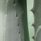 prickly shadows by yvesrossetti