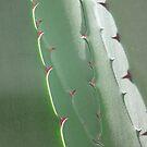 green prickly window by yvesrossetti
