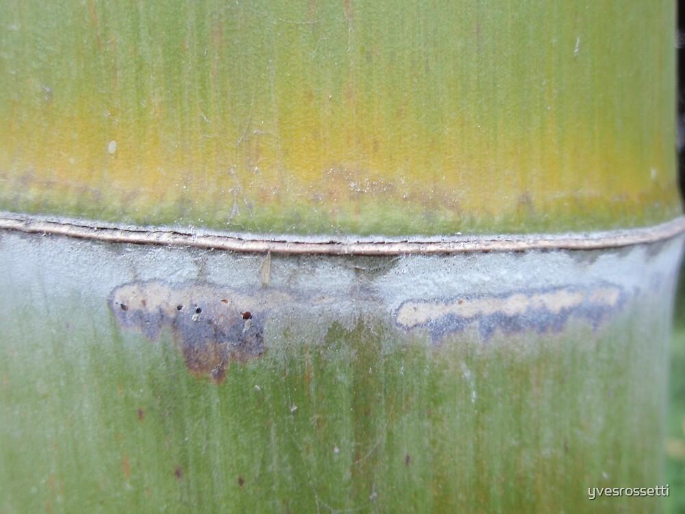 green bamboo node by yvesrossetti