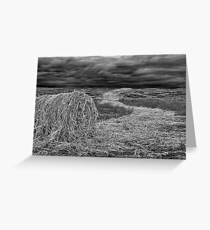 """Haystream"" Greeting Card"