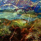 Wilsons Promontory Collage by mawaho