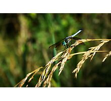 Dragon On Whole Wheat Photographic Print