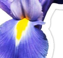 Delicate Purple Iris Sticker