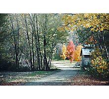 Trois arbres Photographic Print