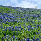 Bluebonnet Heaven by Rob Raab