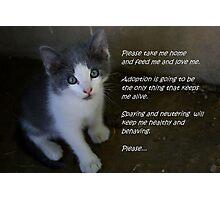 Pet Adoption Photographic Print