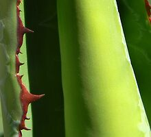 Cactus Detail by Kathleen Brant