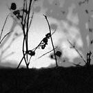 Untitled by fallen