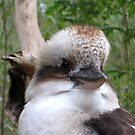 Kookaburra Eyes by Keith Richardson