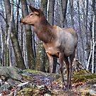 She - Elk by Poete100