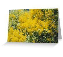 Wattle Flowers Greeting Card