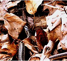 Forest Floor Photographic Print