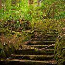 Up the garden path, The Dandenongs by Elana Bailey