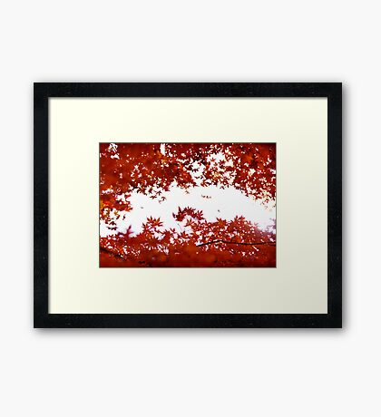 Momiji: Lake Ashinoko, Japan Framed Print