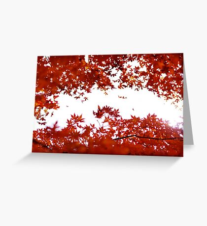 Momiji: Lake Ashinoko, Japan Greeting Card