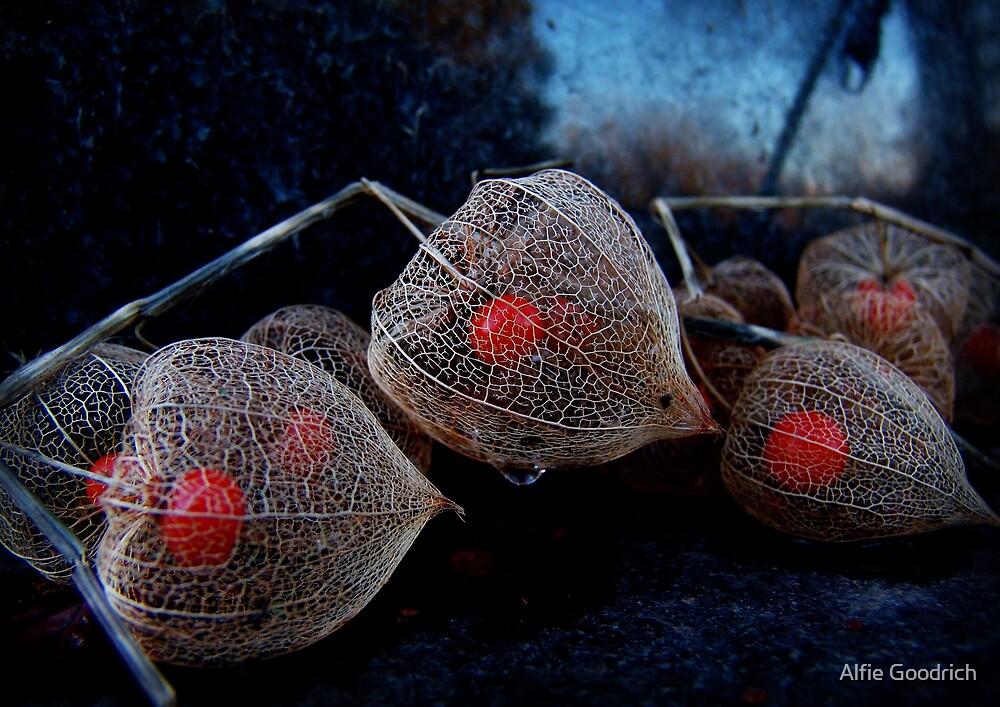Hozuki [Chinese lantern plant]: Abergavenny, Wales, UK by Alfie Goodrich