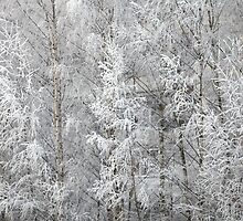 trees covered with hoarfrost by mrivserg
