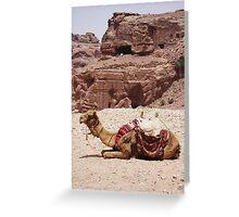 Camel Break Greeting Card