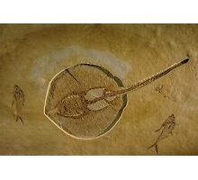 Flat Fish Fossil Photographic Print