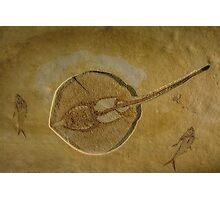 Flat Fish Fossil Photographic Print