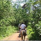 horseback riding in Hawaii, usa by chord0