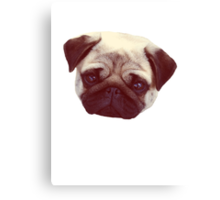 Little Pug Canvas Print