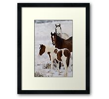 Snow Ponies Framed Print