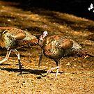 Two Turkey Buddies by imagetj