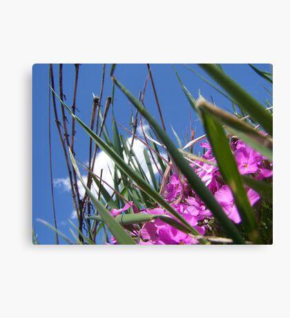 pretty with purple...... Canvas Print