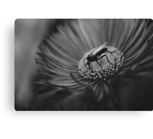 Fly on the wall | Toxic Black Canvas Print