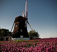 The Mill in the Chives by Kofoed