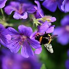 Bumblebee on Geranium by photobymdavey