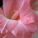 Decorated with droplets by Ana Belaj