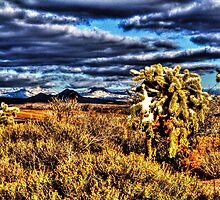 Arizona Winter: New Year's Day 2015 by Roger Passman