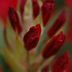 Rhododendron by KimAubrey