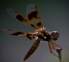 Halloween Pennant by Eric Ordinario