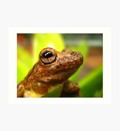 laughing tree frog Art Print